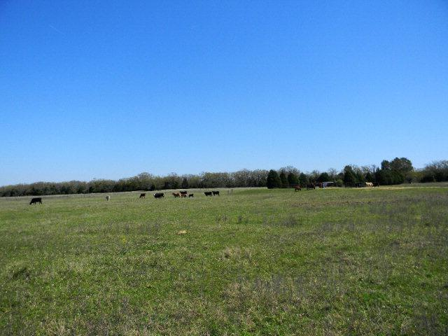 8306 Fm 2494, ATHENS, TX 75751 (MLS #84312) :: Steve Grant Real Estate