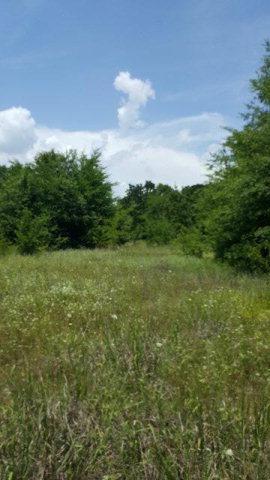 1312 Utopia  Road, TOOL, TX 75143 (MLS #85421) :: Steve Grant Real Estate