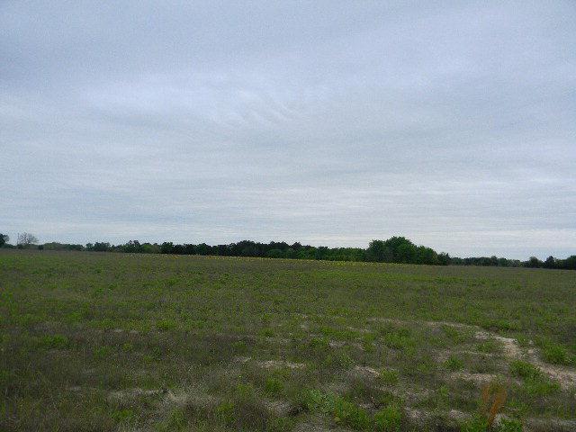 0 Cr 3614, BROWNSBORO, TX 75756 (MLS #85522) :: Steve Grant Real Estate