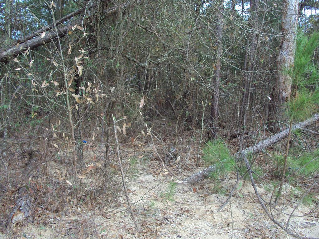 240, 244 Pine Ridge - Photo 1