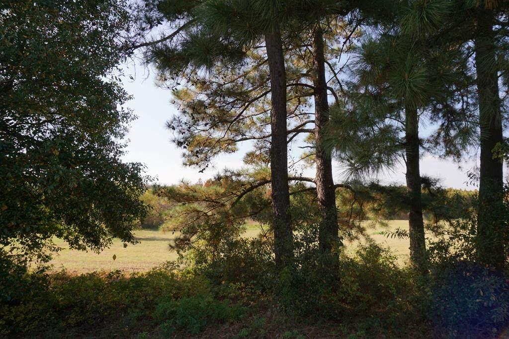 165 Lago Vista Drive - Photo 1