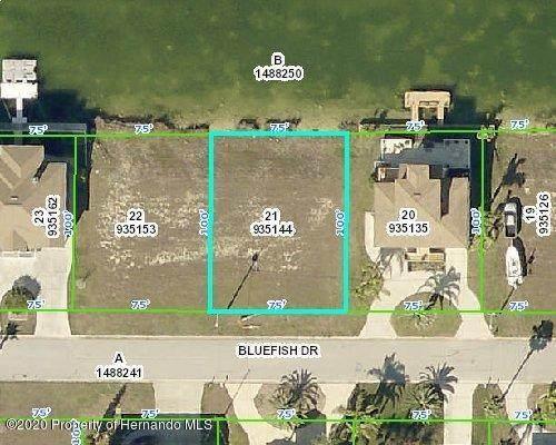 3431 Bluefish Drive, Hernando Beach, FL 34607 (MLS #2213058) :: Premier Home Experts