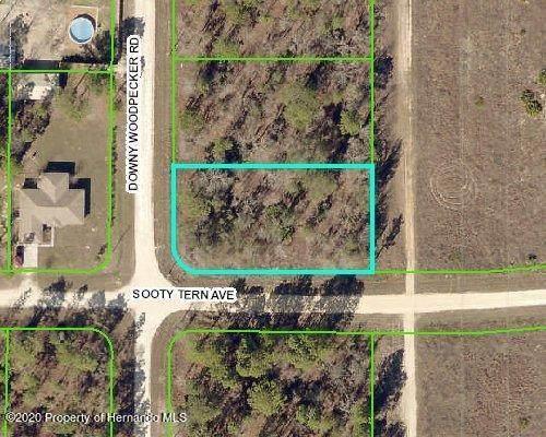 13500 Downy Woodpecker Road, Weeki Wachee, FL 34614 (MLS #2213807) :: Premier Home Experts