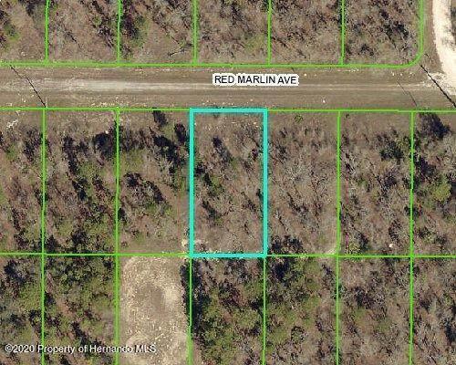 14074 Red Marlin Avenue, Weeki Wachee, FL 34614 (MLS #2213808) :: Premier Home Experts