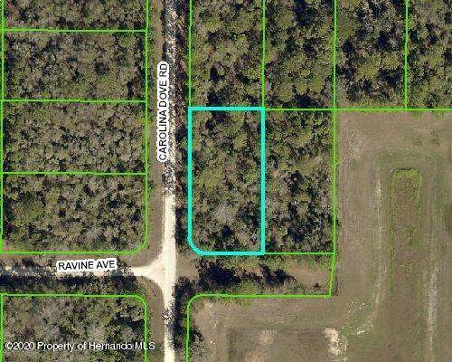 14241 Ravine Avenue, Weeki Wachee, FL 34614 (MLS #2213809) :: Premier Home Experts