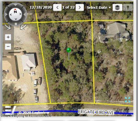 11115 Frigate Bird Avenue, Brooksville, FL 34613 (MLS #2218488) :: Premier Home Experts