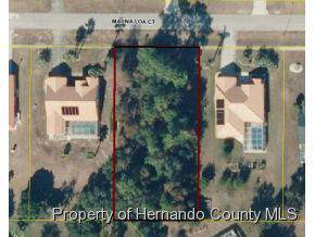 13440 Mauna Loa Court, Spring Hill, FL 34609 (MLS #2130119) :: The Hardy Team - RE/MAX Marketing Specialists