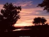 35 Silver Oak Drive - Photo 50