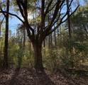 Great Swamp Rd - Photo 3