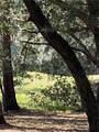 76 Grande Oaks Way - Photo 9