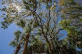 17 Forest Beach Drive - Photo 43
