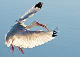 201 Great Heron Court - Photo 43
