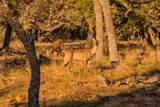265 Palomino Oaks Dr - Photo 7