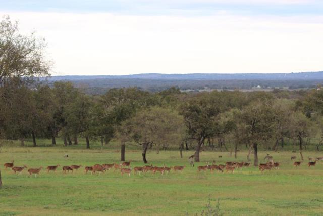881 -- Tree-Krauskopf Rd, Fredericksburg, TX 78624 (MLS #76798) :: Absolute Charm Real Estate