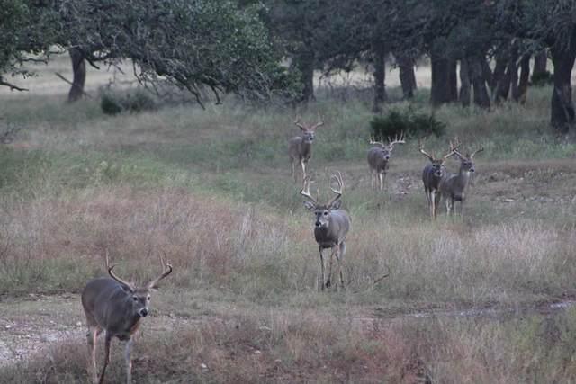 27 -- Black Jack Ranch Rd, Harper, TX 78631 (MLS #82990) :: The Glover Homes & Land Group
