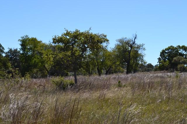 0 -- Overlook Dr, Fredericksburg, TX 78624 (MLS #74663) :: Reata Ranch Realty