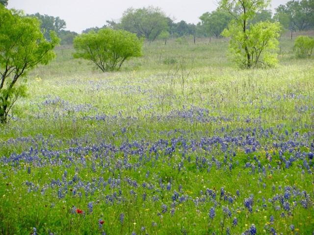0 N Slate Rock Rd, Fredericksburg, TX 78624 (MLS #75265) :: Absolute Charm Real Estate