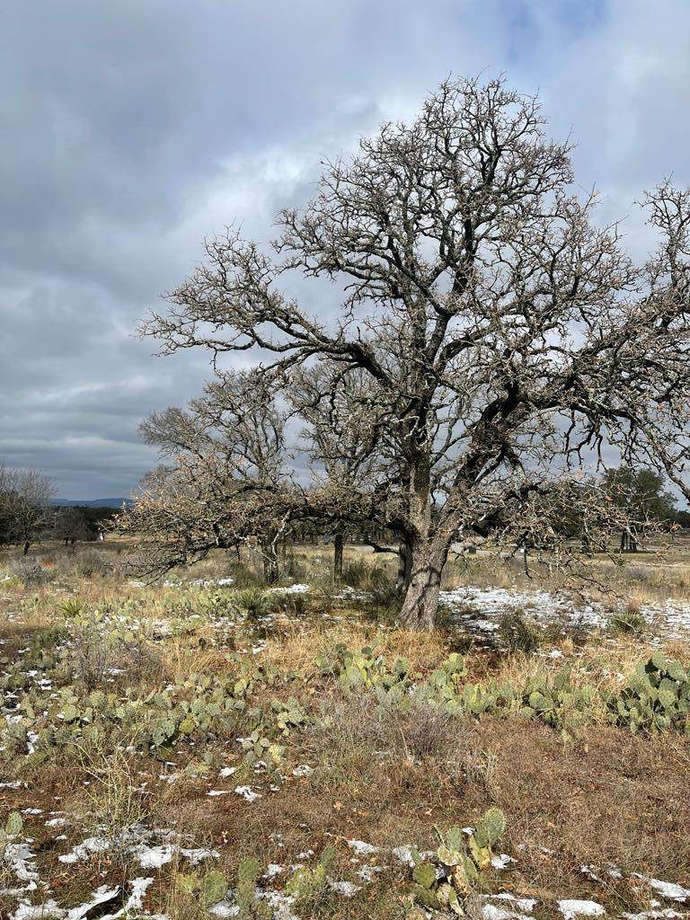 13 Comanche Ridge - Photo 1