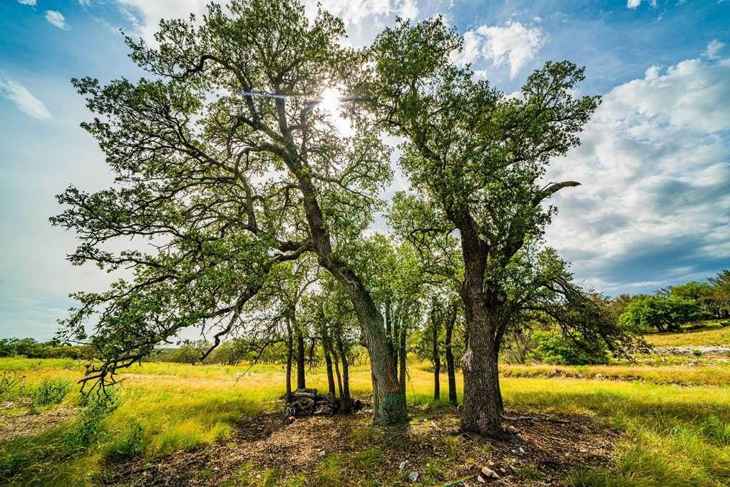 000 Blue Oak - Photo 1