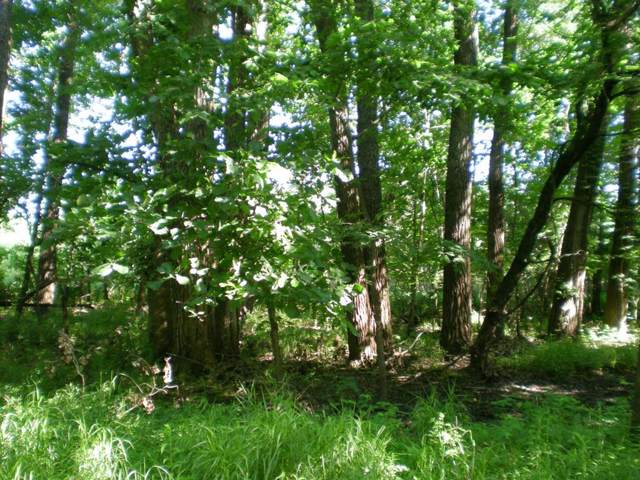 Lot 57 Forest Marsh Loop, Townsend, GA 31331 (MLS #132920) :: Coldwell Banker Southern Coast
