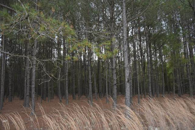 LOT 10 S. T. Morris Road, Ludowici, GA 31316 (MLS #138640) :: Coldwell Banker Southern Coast