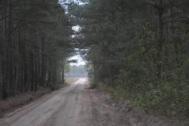 LOT 16 S. T. Morris Road, Ludowici, GA 31316 (MLS #138652) :: Coldwell Banker Southern Coast