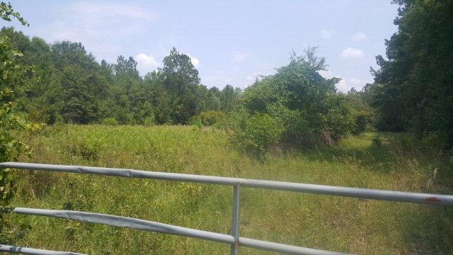 3915 Cowboy Road, Jesup, GA 31546 (MLS #120103) :: RE/MAX All American Realty