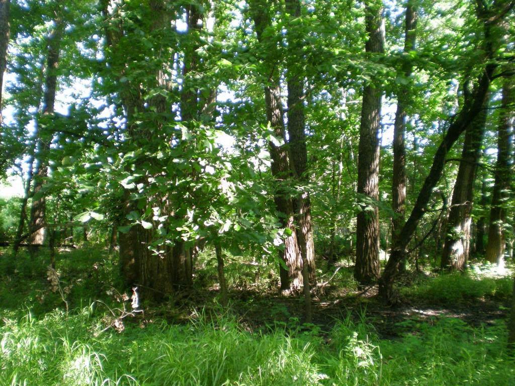 Lot 58 Forest Marsh Loop - Photo 1