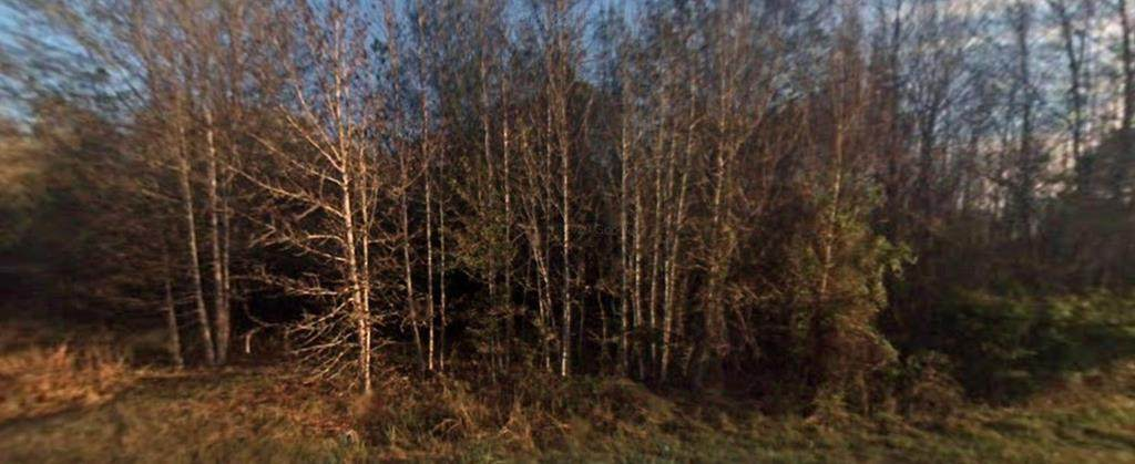 1401 Briar Bay Road - Photo 1
