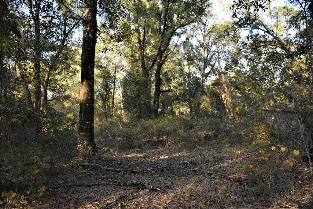 2 Acres Magnolia Lane Se - Photo 1