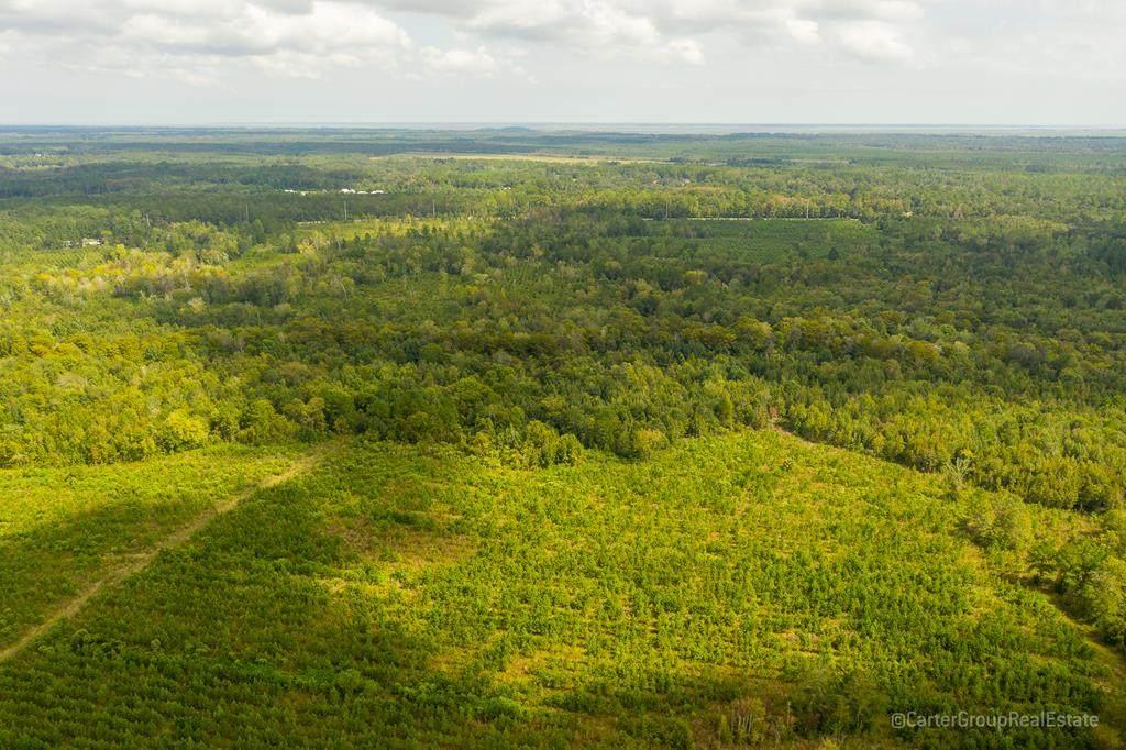 0 King Swamp Road - Photo 1