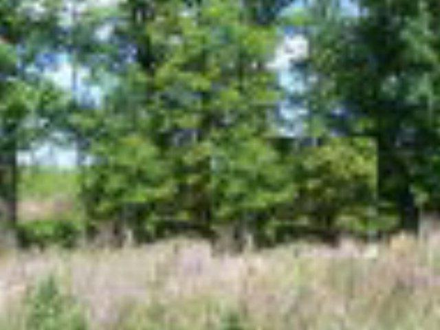 96.5 AC East Oglethorpe Highway, Flemington, GA 31313 (MLS #93661) :: Coldwell Banker Holtzman, Realtors