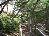 3138 Waialae Avenue - Photo 3