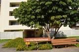 910 Ahana Street - Photo 1