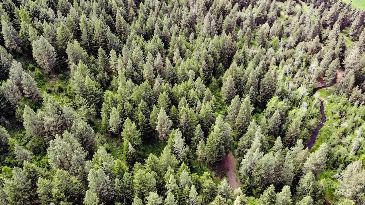 0 Bear Creek Timber Ranch - Photo 1