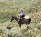 28261 Oxman Ranch Rd - Photo 5