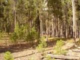 TBD Big Creek Road - Photo 11