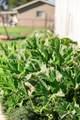 420 Oak Court - Photo 40