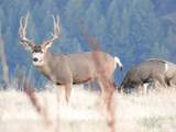 354 Lamb Rd - Photo 15