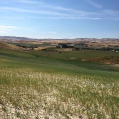 1836 Cemetery Road, Weiser, ID 83672 (MLS #98646072) :: Boise River Realty