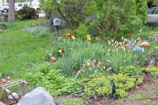 11287 W Hwy 44, Star, ID 83669 (MLS #98653030) :: Boise River Realty