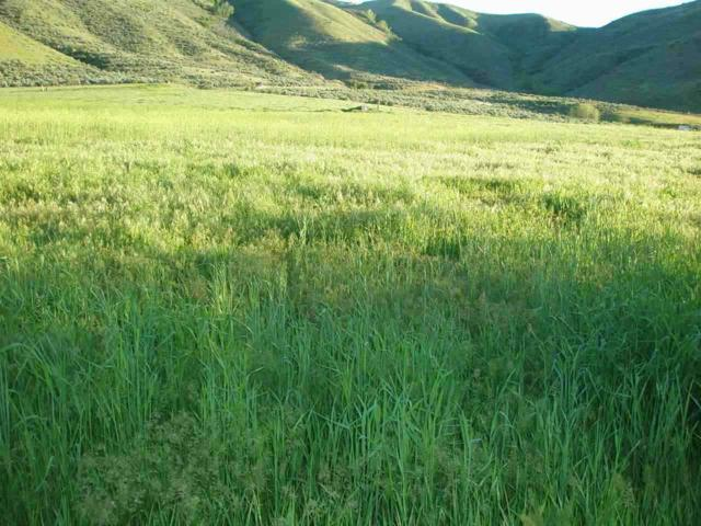 Lot #3 Shoemaker, Horseshoe Bend, ID 83629 (MLS #98615451) :: Full Sail Real Estate