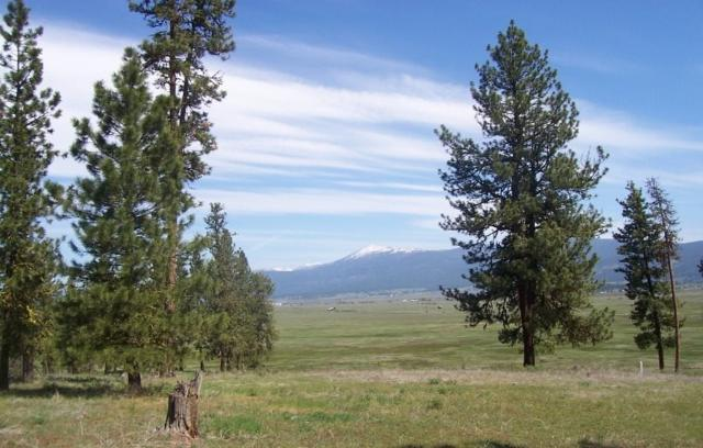 Lot 24 Timber Ridge, New Meadows, ID 83654 (MLS #98656645) :: Team One Group Real Estate