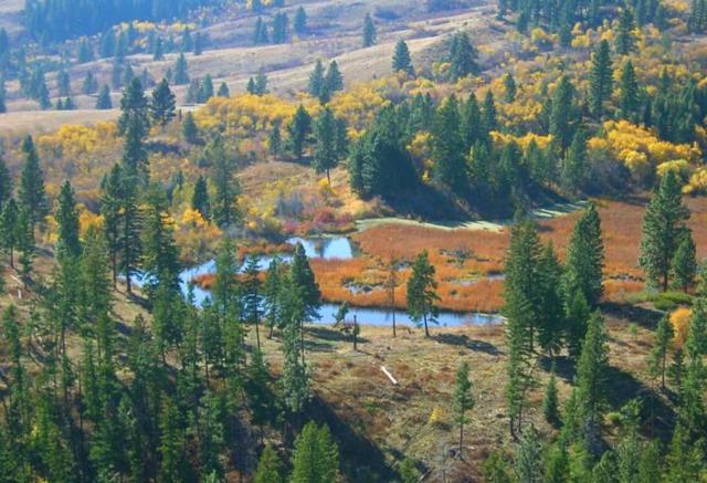 1420 Goodrich Creek Rd, Council, ID 83610 (MLS #98680127) :: Juniper Realty Group