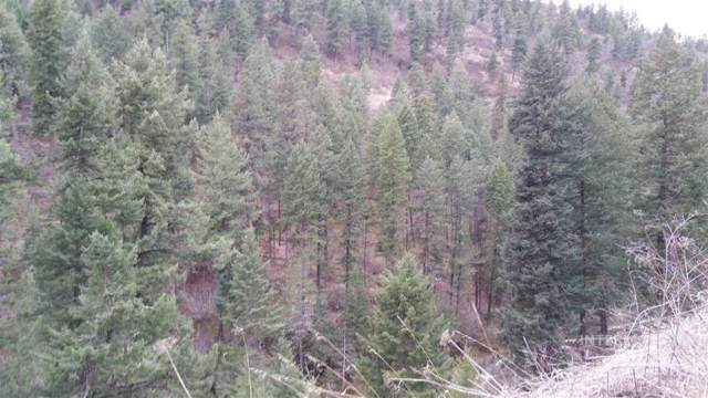 TBD Highway 99, Kendrick, ID 83537 (MLS #98744455) :: Juniper Realty Group