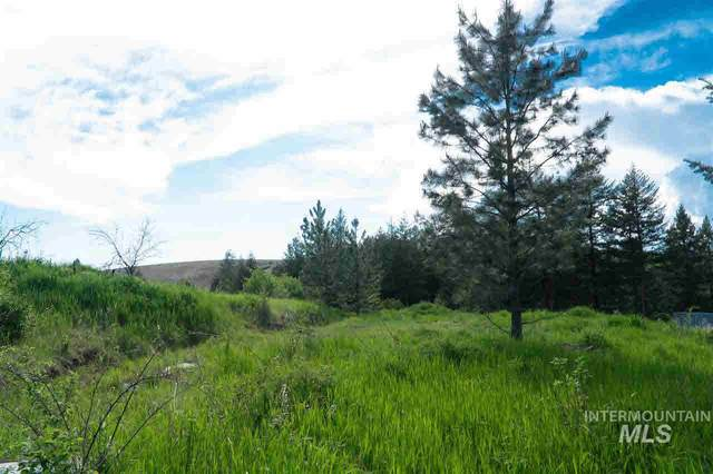 TBD Stolte Canyon Road, Peck, ID 83501 (MLS #98757500) :: Juniper Realty Group