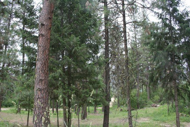 Lot 25 Scriver Woods Road, Garden Valley, ID 83622 (MLS #98625060) :: Boise River Realty