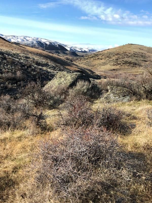 TBD Webster Ranch, Horseshoe Bend, ID 83629 (MLS #98688453) :: Juniper Realty Group