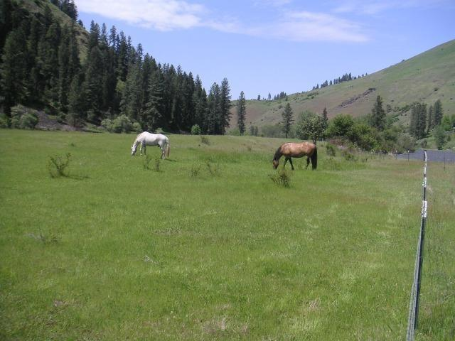 TBD Hwy 13, Harpster, ID 83539 (MLS #98689895) :: Zuber Group
