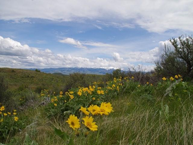 TBD Cuddy View Drive, Council, ID 83612 (MLS #98690676) :: Juniper Realty Group